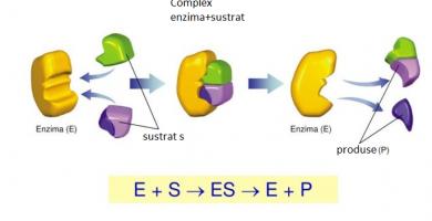 cum funcționează cele mai bune enzime digestive